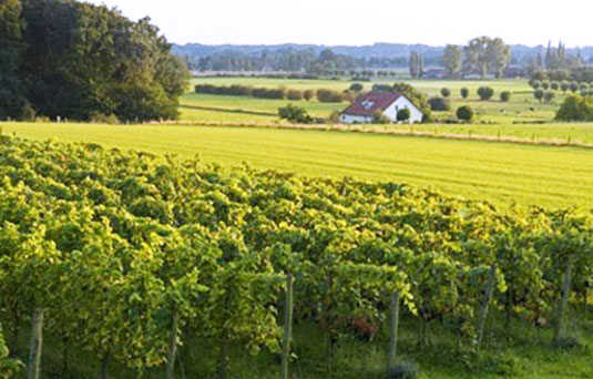 Montferland Wijngoed